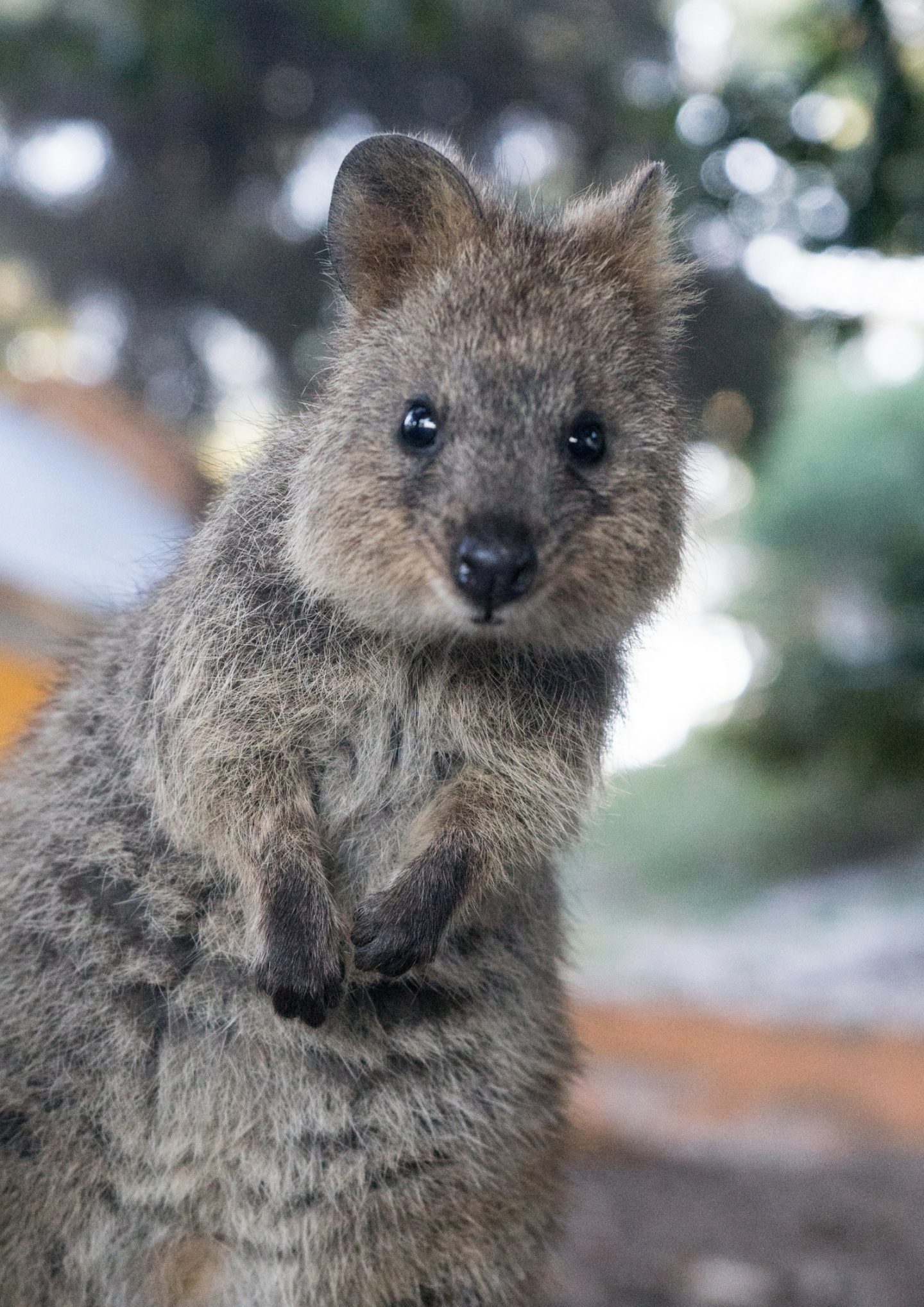 One day on Rottnest Island | Home to the Quokka's
