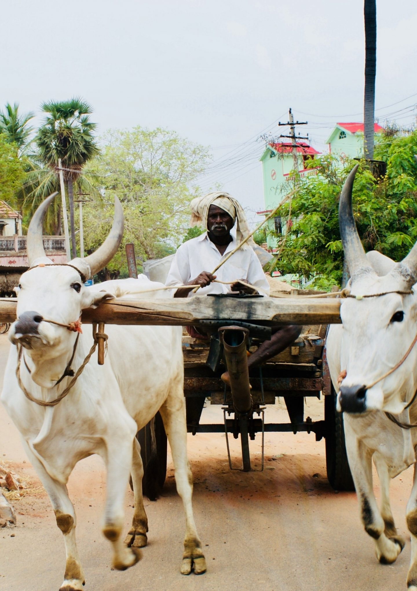 INCREDIBLE INDIA: A ROAD-TRIP IN THE SOUTHERN STATES