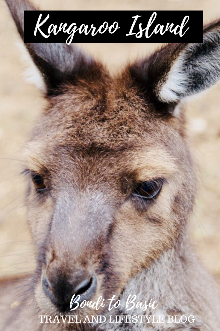 things to see on kangaroo island