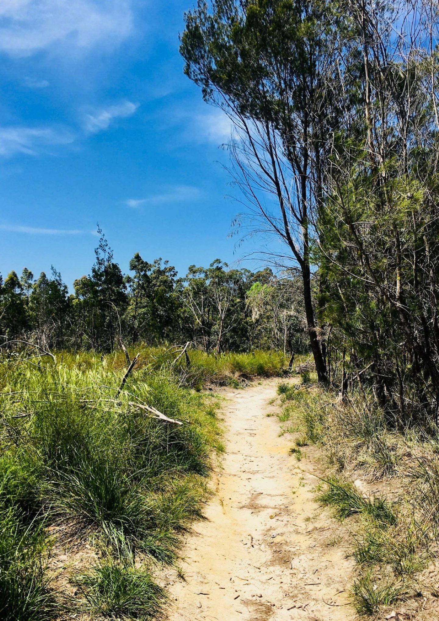 Two Creek Walking Trial | Sydney Hiking Trails