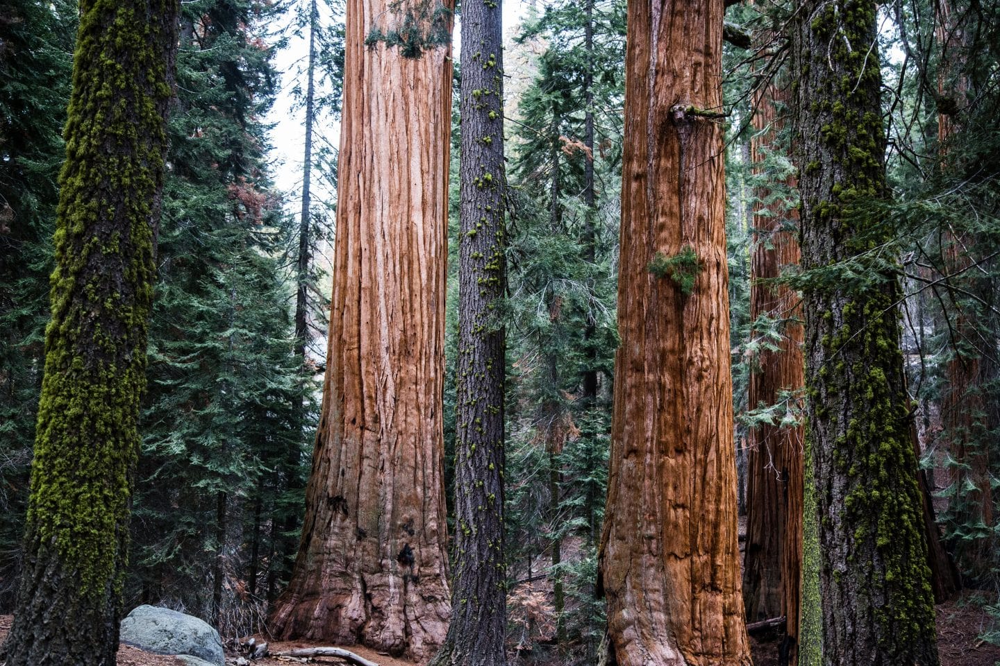 Sequoia National Park is home to the General Sherman Tree, the largest tree in the world.