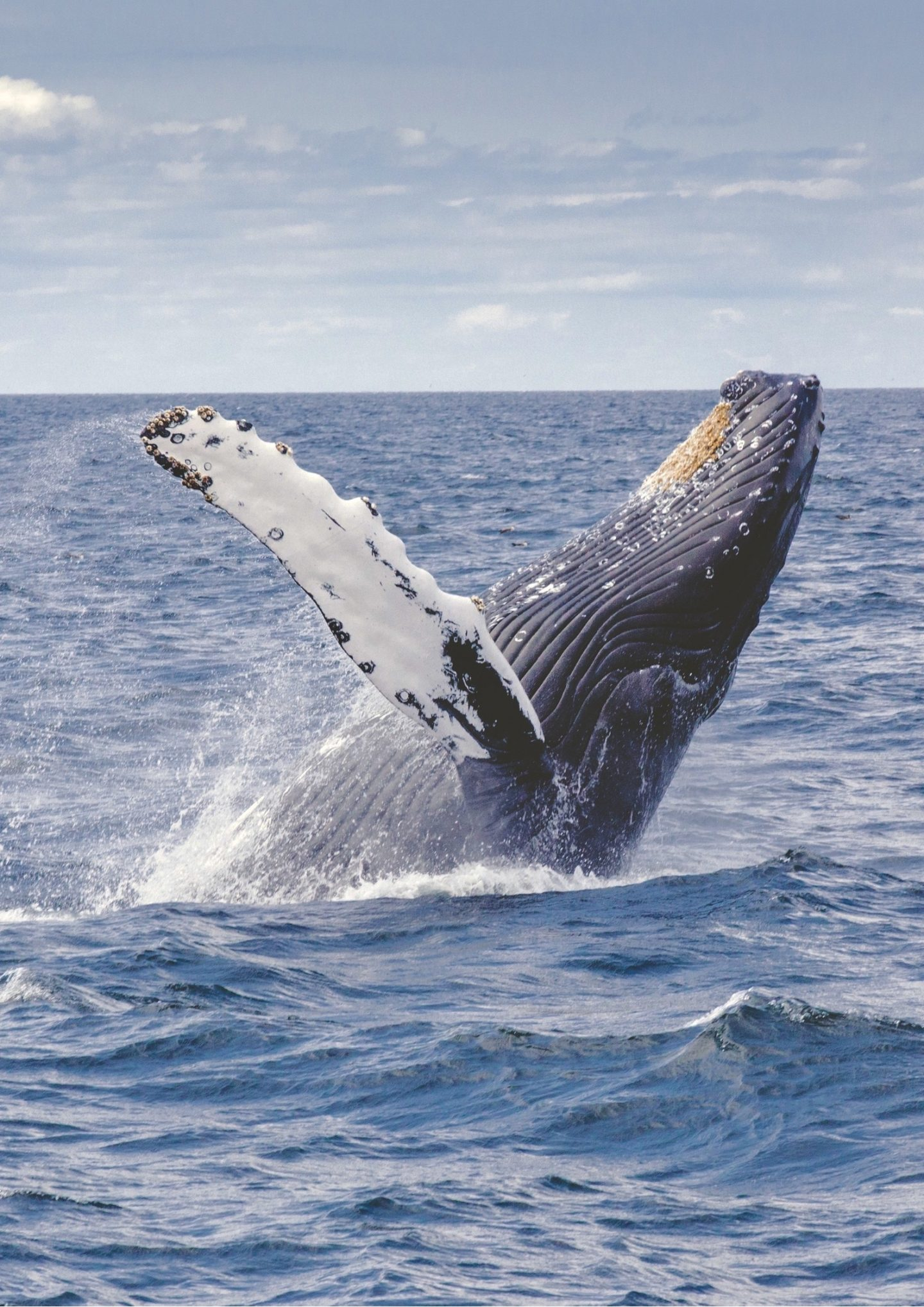 A WHALE OF A TIME ON SYDNEY HARBOUR