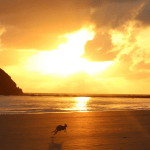 CAPE HILLSBOROUGH BEACH | SUNRISE WITH KANGAROOS