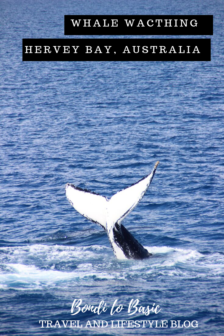 Hervey Bay Whale Watching