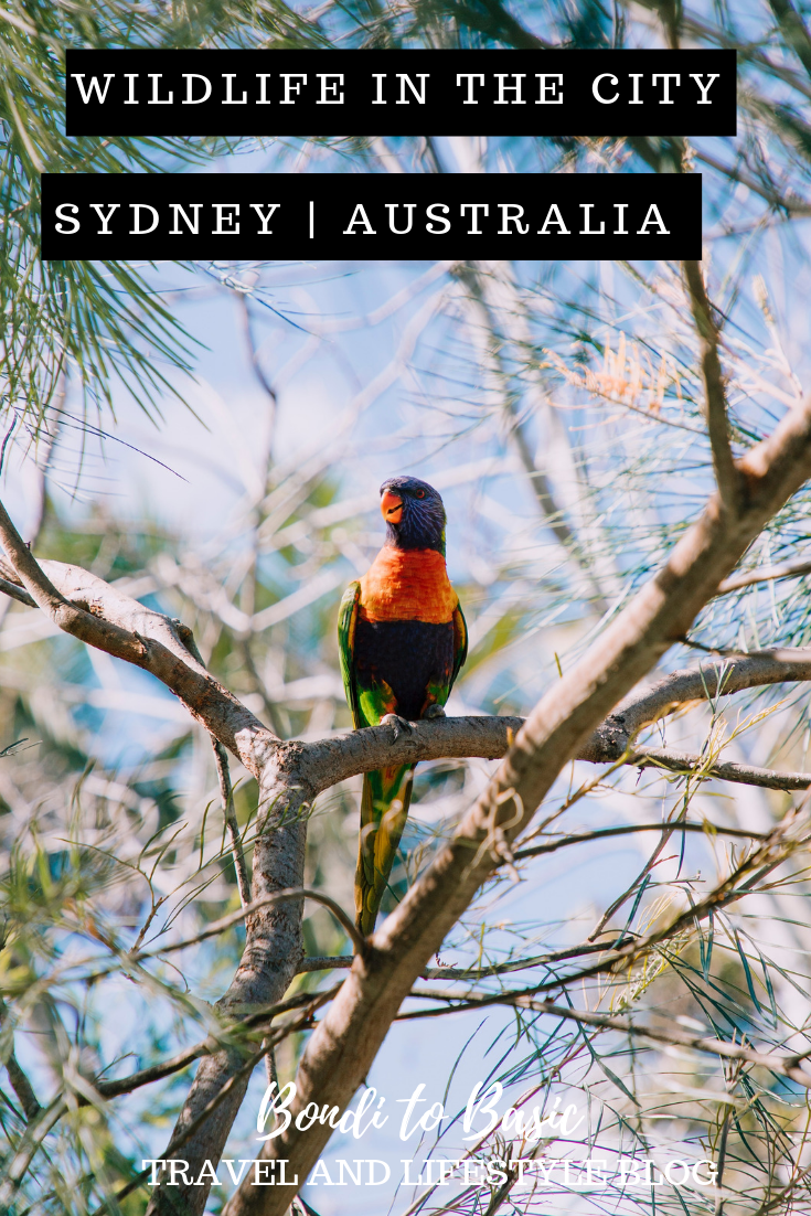 Where to see Australian Wildlife in Sydney