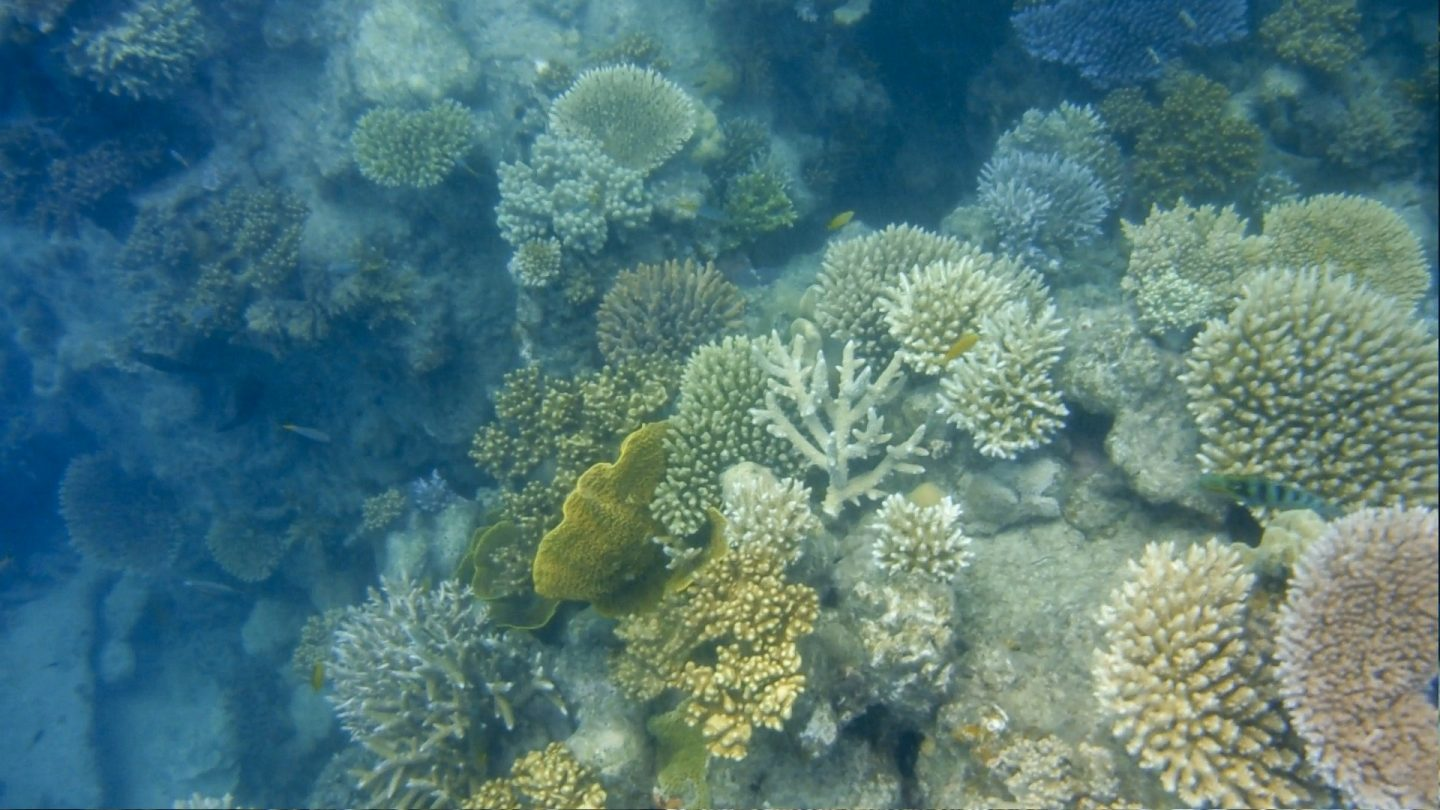 Snorkelling at the great Barrier Reef with Ocean Safari (Daintree National Park)