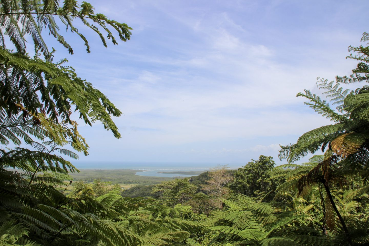 Mount Alexandra Lookout | Daintree rainforest | Where the rainforest meets the ocean