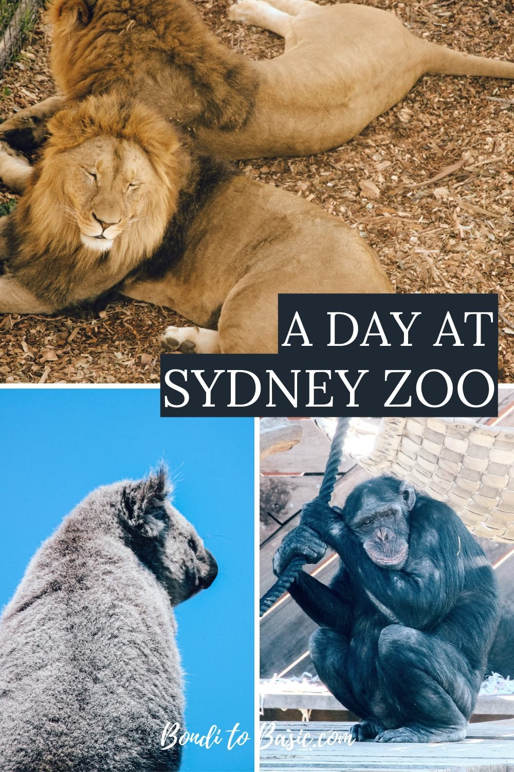Spending a Day at Sydney's Newest Zoo - Sydney Zoo Blacktown